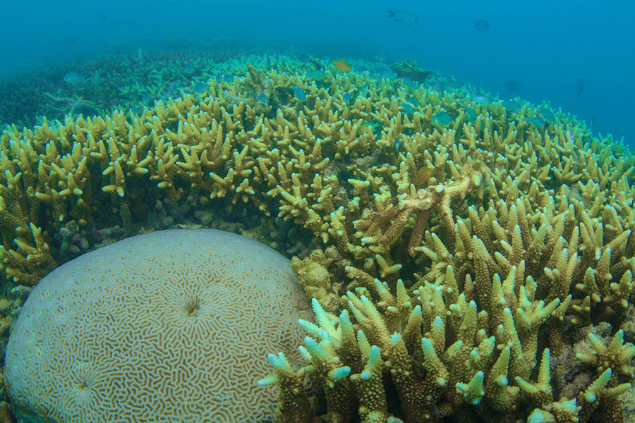 Coral after Cyclone Debbie